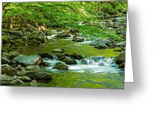 Creek In Great Smoky Mountains National Greeting Card