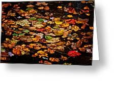 Creek Leaves Greeting Card