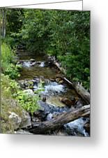 Creek On Mt. Spokane 1 Greeting Card