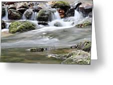 Creek With Rocks Spring Scene Greeting Card