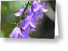 Creeping Bellflower  Greeting Card