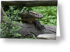 Creeping Komodo Monitor Climbing Under A Fallen Log Greeting Card