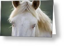 Cremello's Eyes Greeting Card