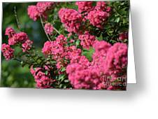 Crepe Myrtle Blossoms 2 Greeting Card