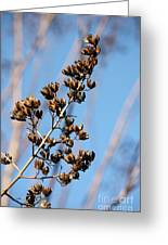 Crepe Myrtle In Blue Greeting Card