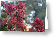 Crepe Myrtle Tree Blossoms Greeting Card