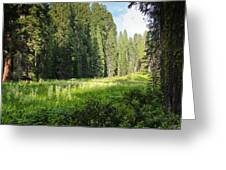Crescent Meadow In Sequoia Greeting Card
