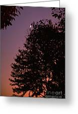 Crescent Moon And Tree Silhouette At Dusk Greeting Card