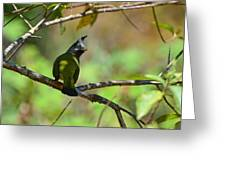 Crested Finchbill 2 Greeting Card