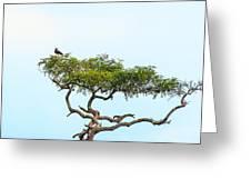 Crested Snake Eagle Greeting Card