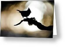 Crested Tit Silhouette Greeting Card