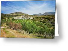 Crete Olive Grove Greeting Card