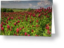 Crimson Clover Patch Greeting Card