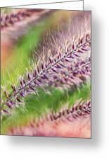 Crimson Fountaingrass Abstract Greeting Card