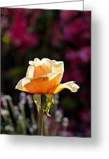 Crimson Gold Lavender Greeting Card