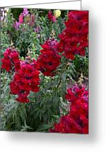 Crimson Snapdragons Greeting Card
