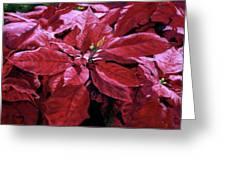 Crimson Joy Greeting Card