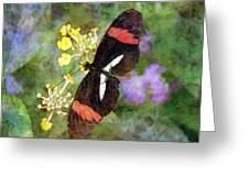 Crimson Longwing Butterfly 8231 Idp_2 Greeting Card