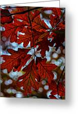 Crimson Oak Greeting Card
