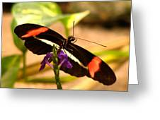 Crimson Patched Longwing 2 Greeting Card