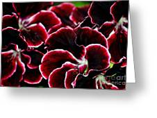 Crimson Propellers Greeting Card