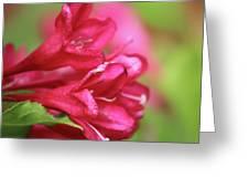 Crimson Greeting Card
