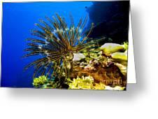 Crinoid At Pakin Atoll2 Greeting Card