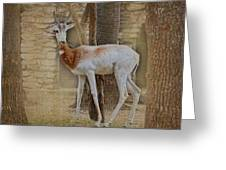 Critically Endangered Dama Gazelle Greeting Card