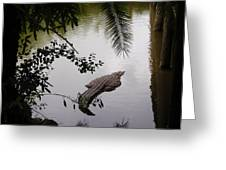 Croco Greeting Card