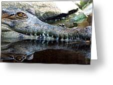 Crocodile X2 Greeting Card