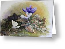 Crocus Greeting Card