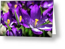 Crocus Amongst Us Greeting Card