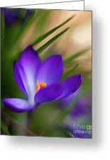 Crocus Light Greeting Card