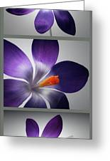 Crocus Triptych. Greeting Card