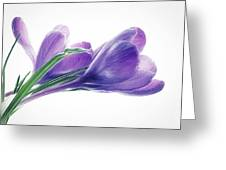 Crocuses - Impressions Greeting Card