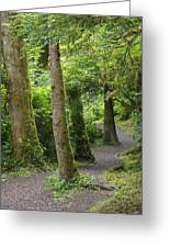 Crooked Little Path Greeting Card