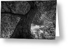Crooked Oak Black And White Greeting Card