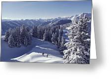 Cross-country Skiing In Aspen, Colorado Greeting Card