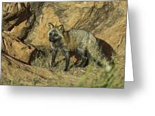 Cross Fox On Red Rocks Greeting Card