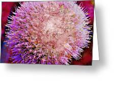Cross Hatch Beauty Greeting Card