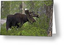 Cross Moose Greeting Card