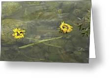 Crossed Sunflower  Greeting Card