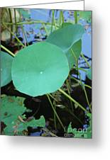 Crossing The Lily Pond Outback Number One Greeting Card
