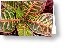 Croton - A Center View Greeting Card