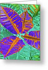 Croton - Blue Greeting Card