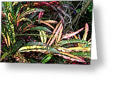 Croton 1 Greeting Card