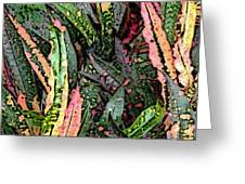Croton 3 Greeting Card by Eikoni Images