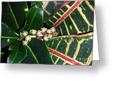 Croton Blooming Greeting Card