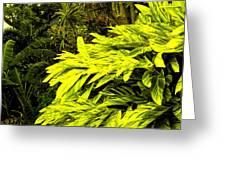 Croton Cascading Down The Hillside Greeting Card