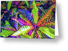 Croton Foliage Greeting Card
